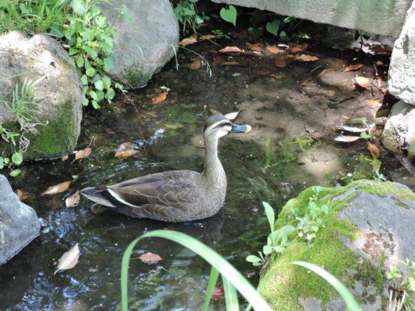水浴中2DSCN6367